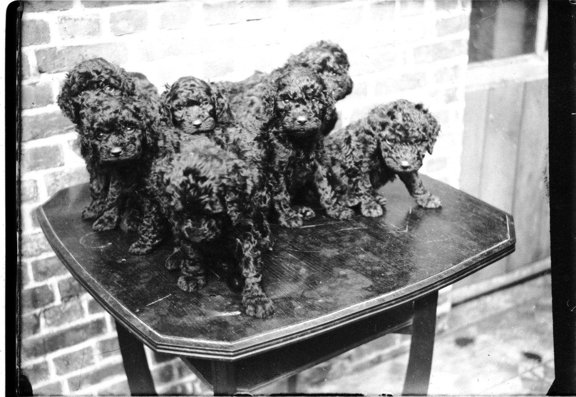 Collectie Rik Sauter (1885-1952) 174