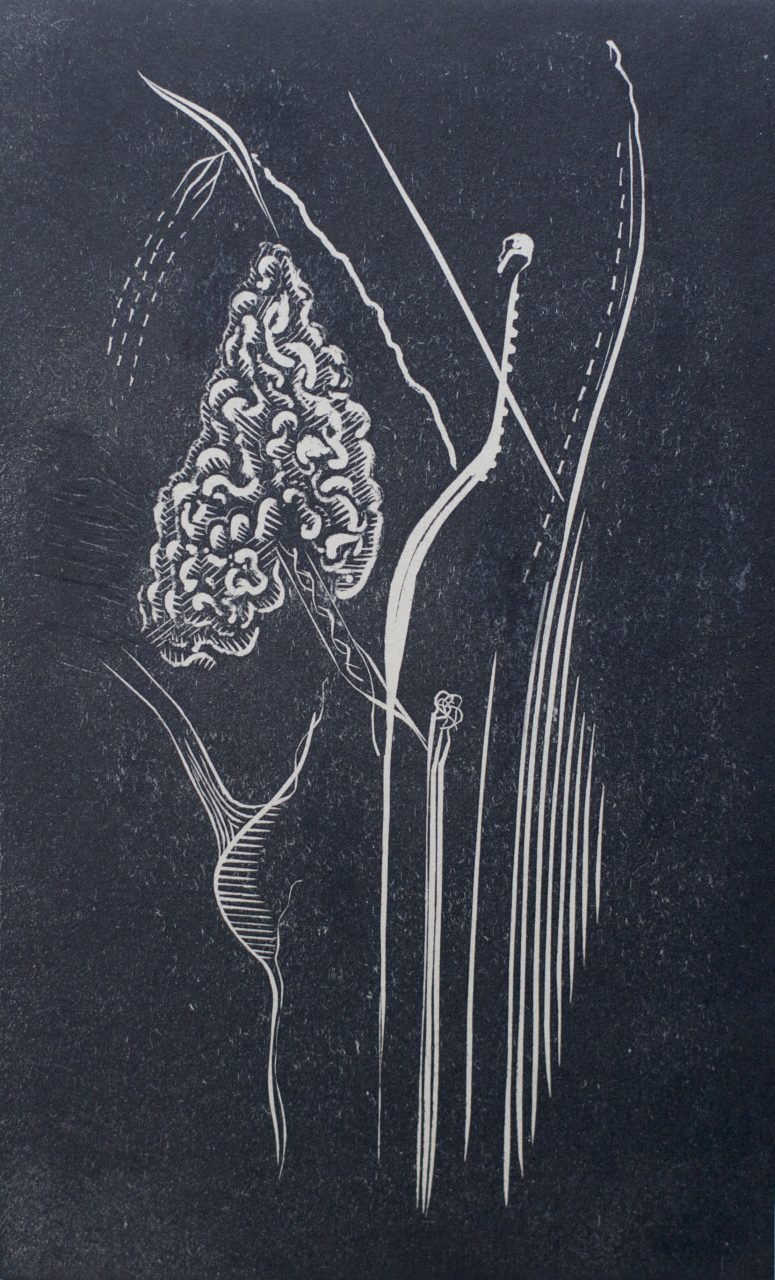 Victor Delhez Gervicorinocordiaal rythmius II